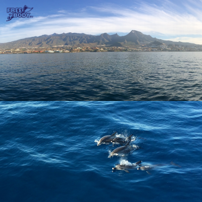 <h4>Freediving course in <b>Tenerife</b></h4>